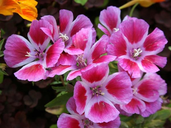 Цветы фото редкие комнатные растения